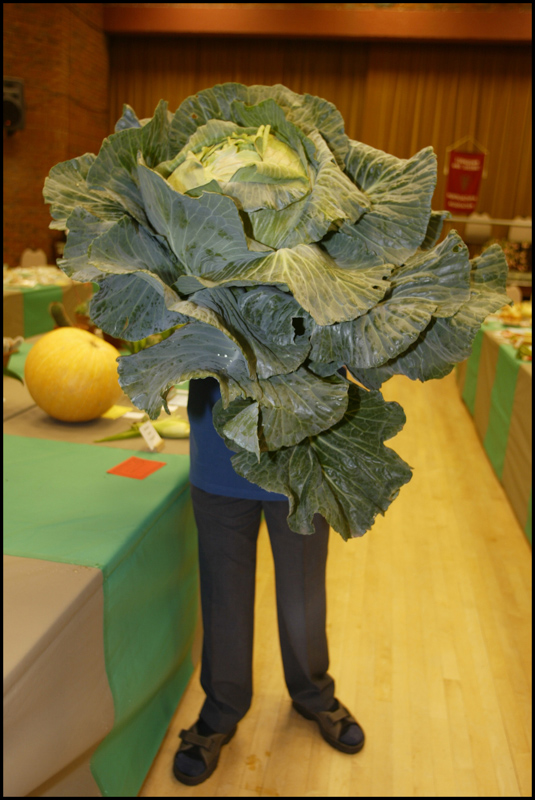 Ed Hurrell and his prize winning giant cabbage.